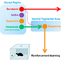 Serotonergic versus Nonserotonergic Dorsal Raphe Projection Neurons: Differential Participation in Reward Circuitry