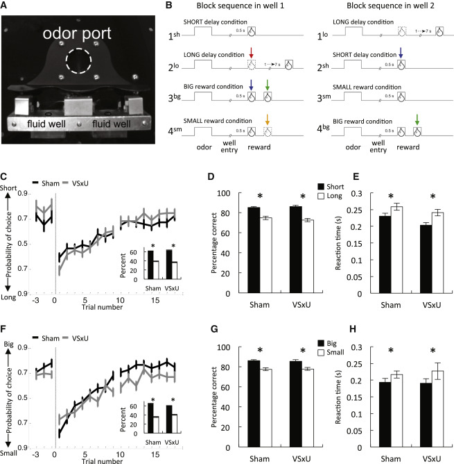 Temporal Specificity of Reward Prediction Errors Signaled by Putative Dopamine Neurons in Rat VTA Depends on Ventral Striatum