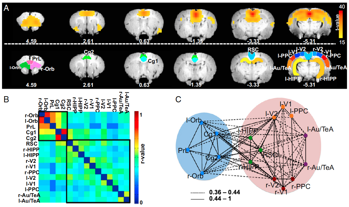 Constituents and functional implications of the rat default mode network.