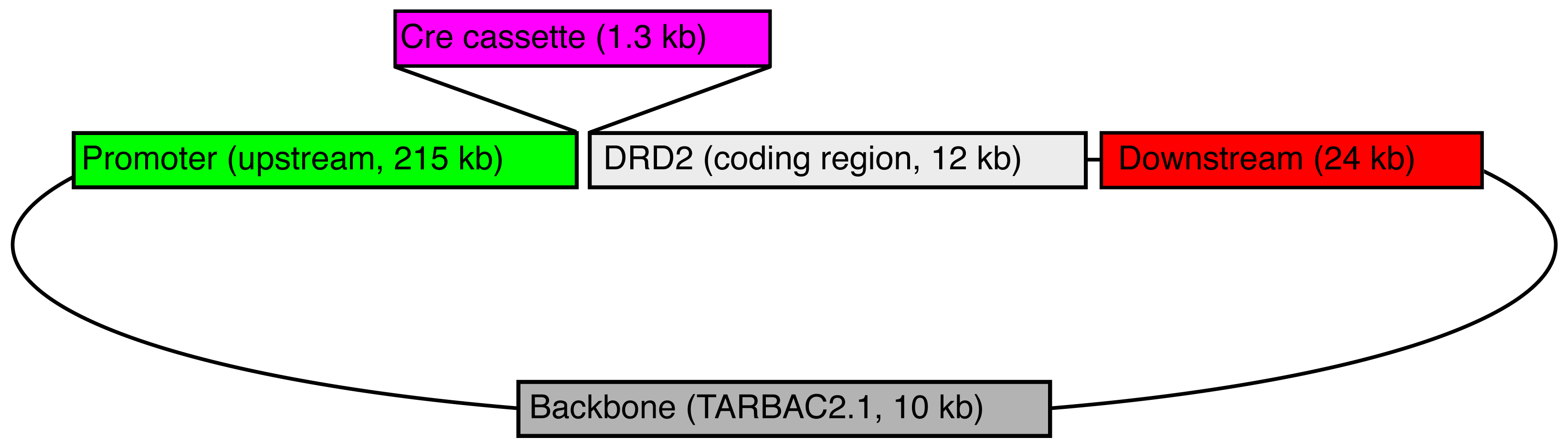 Schematic Draft - Drd2-iCre