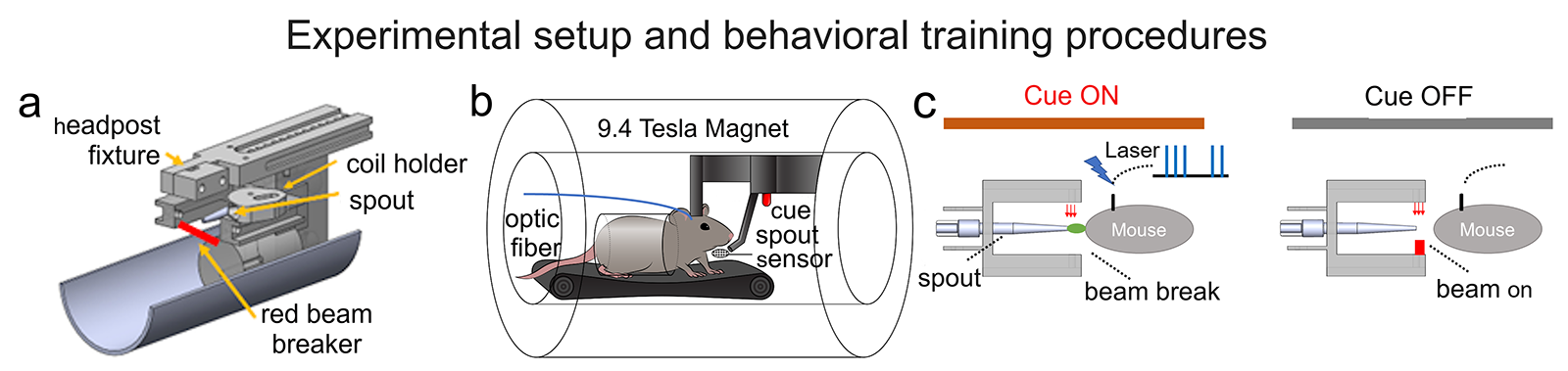 Whole brain dynamics during optogenetic self-stimulation of the medial prefrontal cortex in mice